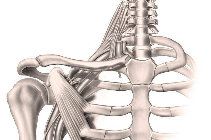 Formation OPPQ-La traversée cervico-thoraco-brachiale: Évaluer et analyser ses déséquilibres pour élaborer et offrir une approche clinique optimale